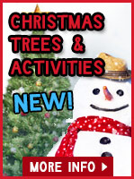 Christmas Trees & Winter Activities