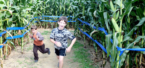 Giant Maize Quest® Corn Maze - Springdale, AR