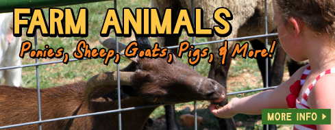 Petting Zoo - Springdale, Arkansas