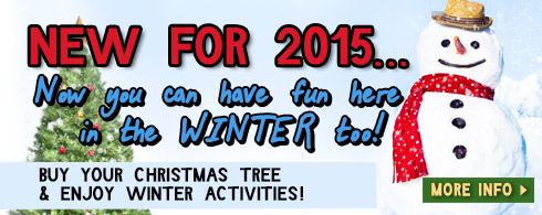 New! Christmas Trees and Winter Activities