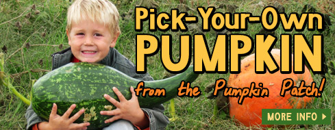 Pick Your Own Pumpkin Patch - Springdale, AR